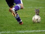 狗粉丝狂追自己足球偶像!盘点那些神奇的动物粉丝