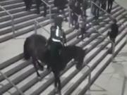 骑着马下楼梯会发生什么?这匹马直接颠覆了我对搞笑的认知