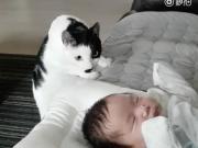 喵星人:完了完了,我把他吵醒了,要哭闹了,溜了溜了