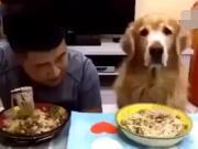 厉害了,主人和大金毛比赛吃面条,猜猜结果谁赢了