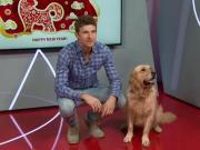 拜仁新春拜年视频幕后花絮,揭秘狗狗的受宠故事