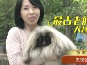 狗年探狗,来看世界各地别具特色的狗,你都认识吗?
