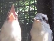 旁边这只小鸟心里一定在想:这俩二货到底在笑什么