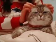 """居然这么""""蹂躏""""自己的猫咪,姑娘你就不怕它离家出走么?"""