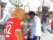 在拜仁你甚至能被伯尼熊穿裆!哈马的内心是无比崩溃的