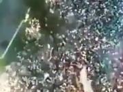 巴西球迷对足球有多狂热?用恐怖来形容这个场面绝对不为过