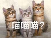 懂球帝海报:半场5-0,还要喵喵喵吗?